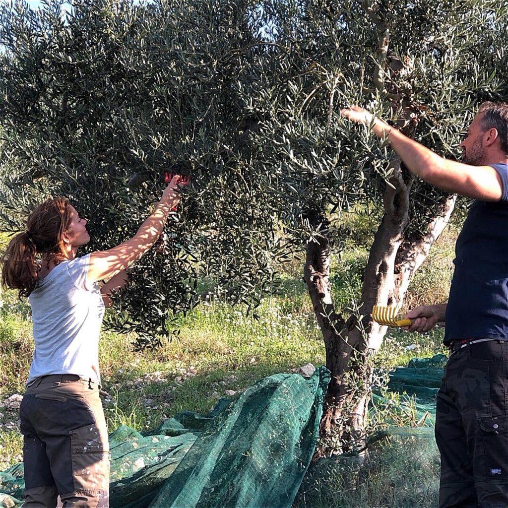 De första veckorna i oktober börjar årets olivskörd på Sicilien.  Tillsammans med släkten och de lokala bönderna handplockar vi den första skörden av ekologiskt odlade biancolilla oliven.  Närmare bestämt I den lilla bergsbyn Lucca Sicula på öns sydkust.